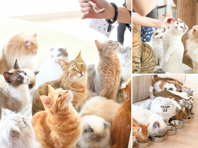 大人気猫カフェの全面協力のもと徹底比較!