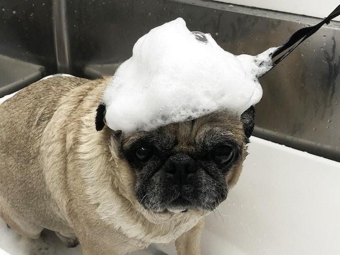犬用シャンプーは必要?