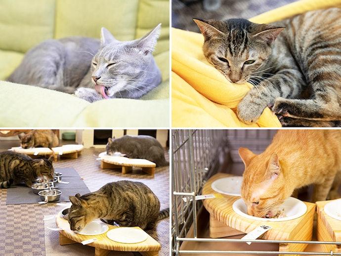 保護猫カフェが検証協力!