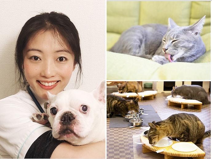 ぺットの専門家と保護猫カフェが検証協力!