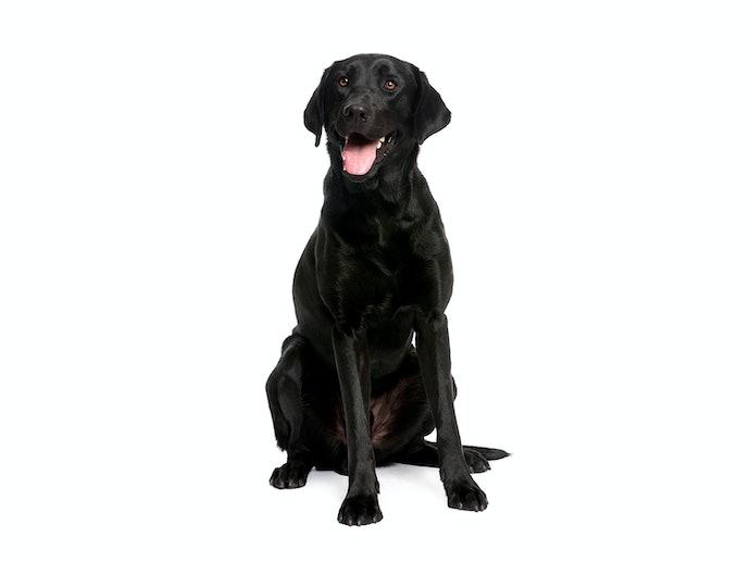 成犬には健康維持が目的の「アダルト犬用」