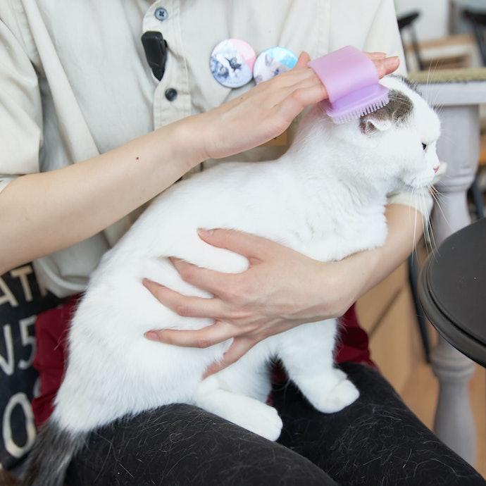 ブラッシングが苦手な猫には「ラバーブラシ」