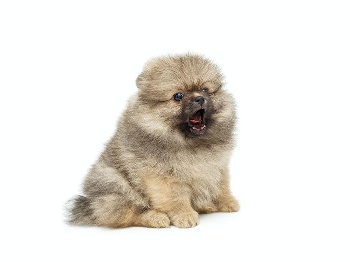 子犬には栄養バランスと消化の良さを重視した「パピー用」