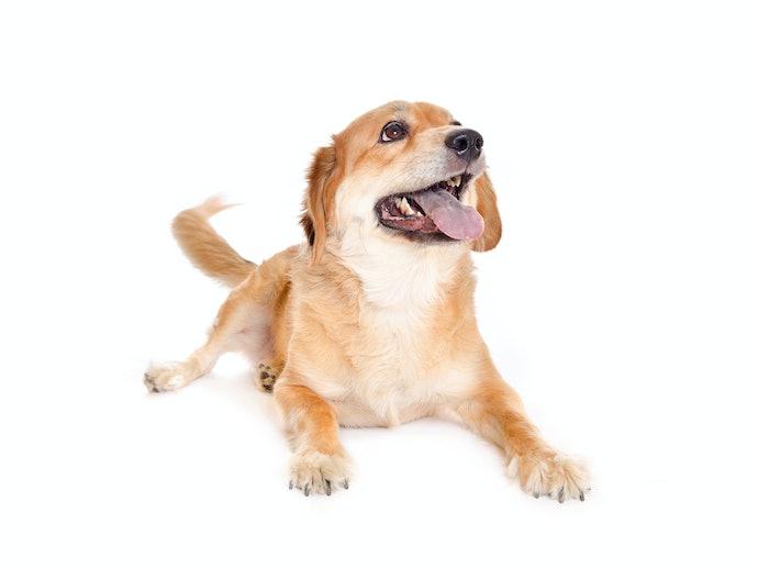 老犬にはカロリーが低く栄養価の高い「シニア犬用」