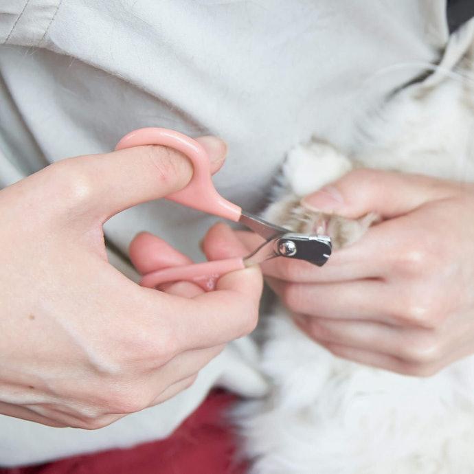 子猫・柔らかい爪の猫には「ハサミタイプ」