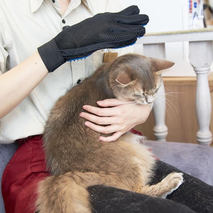 【検証結果ハイライト】最も猫が気持ちよさそうにしていたのは、撫でる感覚で使える「ペットブラシ グローブ」