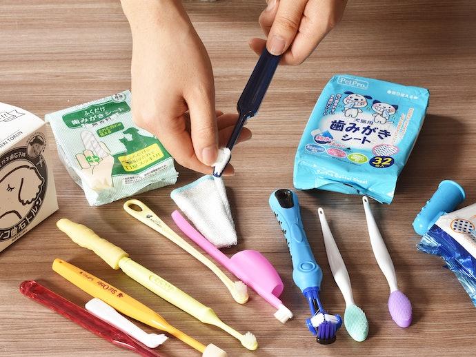 犬用歯ブラシの検証