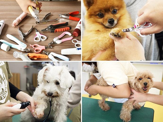 犬用爪切りの検証