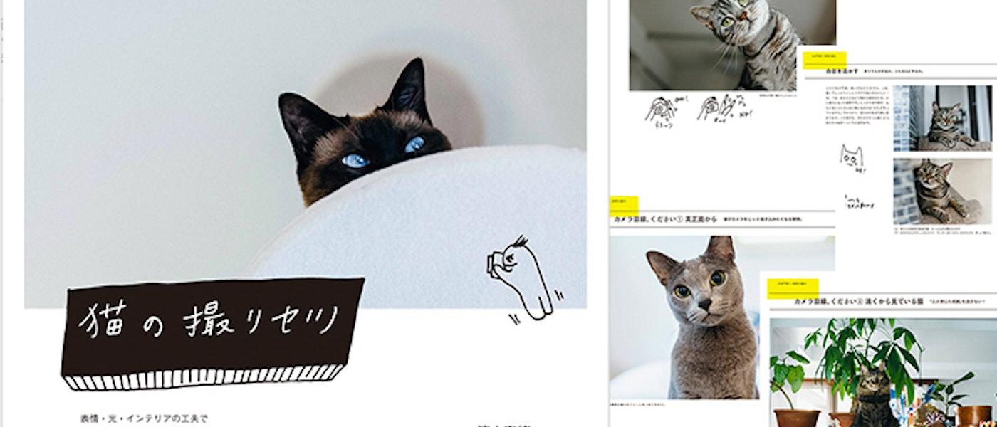 キャットシッターがおすすめする猫本10選【猫好き必見!】