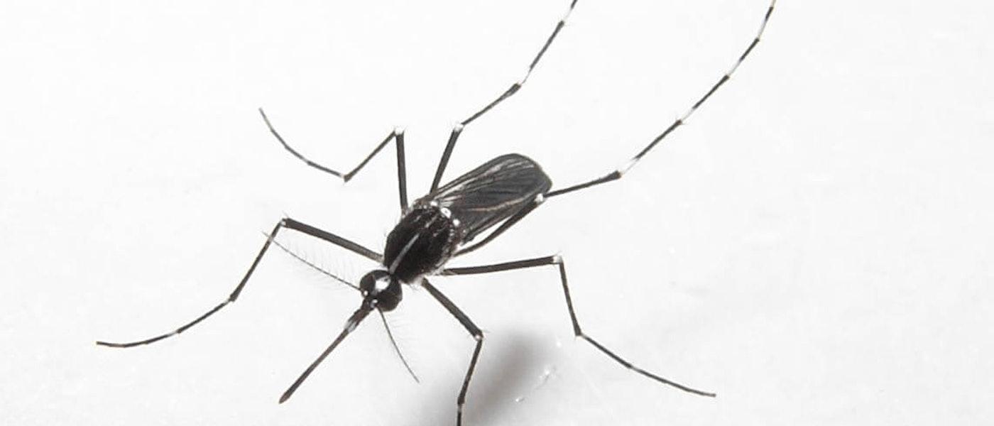 蚊の専門家がおすすめする蚊対策グッズ9選