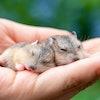 小動物ブリーダーが愛用!小動物向けの飼育用品10選【ハムスター・モモンガ・インコに!】