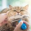 多頭飼いのお家におすすめ!猫ブロガーが選ぶ便利すぎる猫グッズ10選