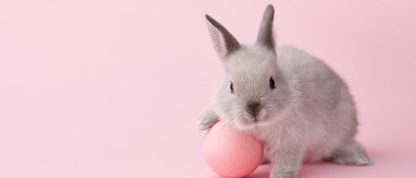 動物看護師・トリマー歴10年の私がおすすめするウサギグッズ10選