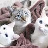 猫生活を快適に!ニャンスタグラマー『ルカ・珊瑚・くらら』が愛用する猫用品10選