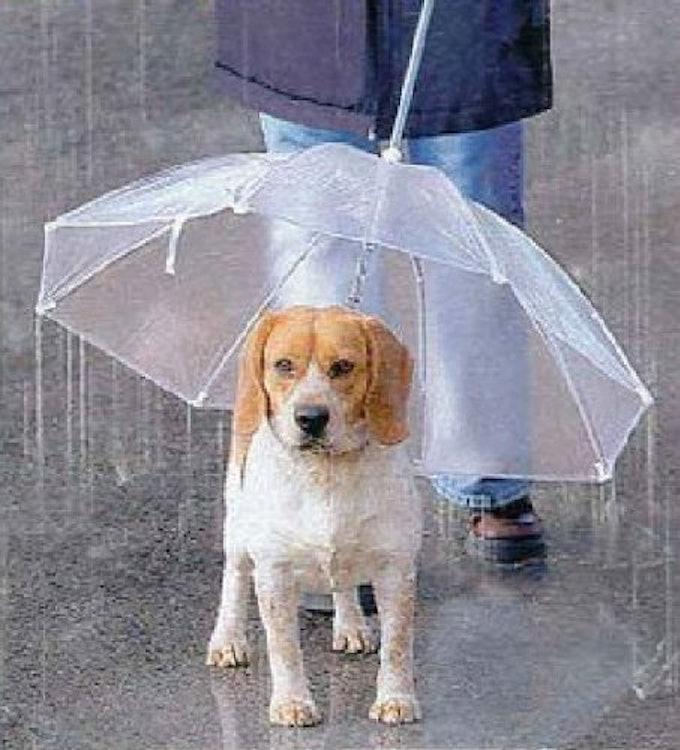 宝や 犬用傘 1枚目