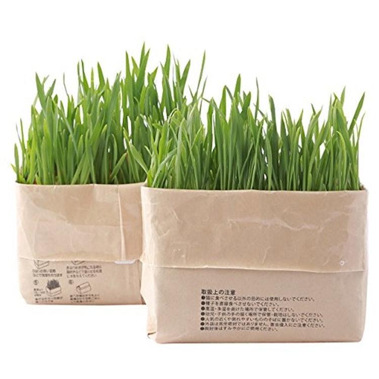 猫草栽培セット 2個入りの画像