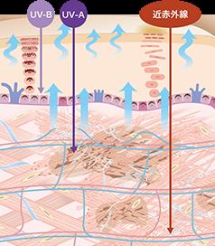 紫外線だけではない!肌へのダメージが大きい「近赤外線」に着目し、一般的なUVケアでは防げないダメージまでカット
