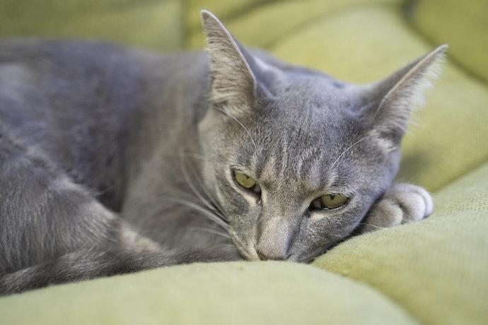 口コミ②:匂いがきつく猫が嫌がる