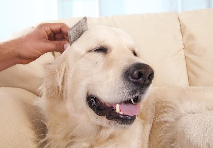 愛犬の健康をサポート!便通や毛艶まで配慮