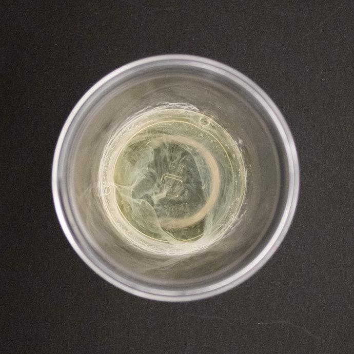 濁りが多く、カップの底面がようやく見える程度